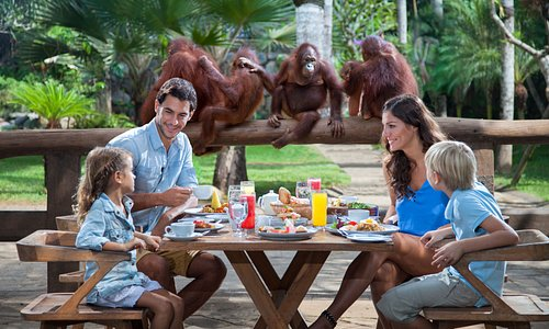 Breakfast with Orangutan at Bali Zoo