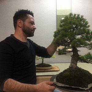 interessanti corsi per apprendere tutte le tecniche d arte bonsai a disposizione di chiunque!!