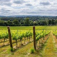 Stunning views over the Surrey Hills (photo credit @GreatBritishWine)