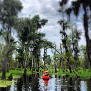 The Amazing Manchac Swamp