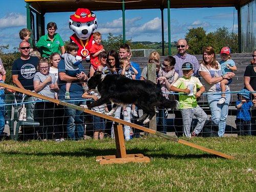 Dog agility show