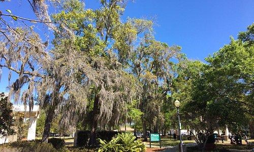Shady Park (across the street)