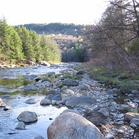 Downstream of the MA Gorge the Westfield River is trout fishing treasure