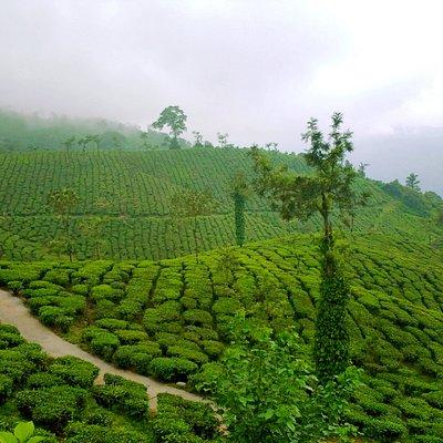Malakkapara
