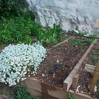 גינת ירק חיצונית מטופחת
