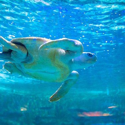 Mario Fernando es una de nuestras tortugas marinas residentes