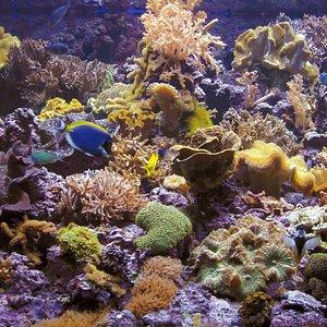 Podemos disfrutar de los maravillosos arrecifes de coral