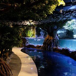 Ray Pool at Jakarta Aquarium