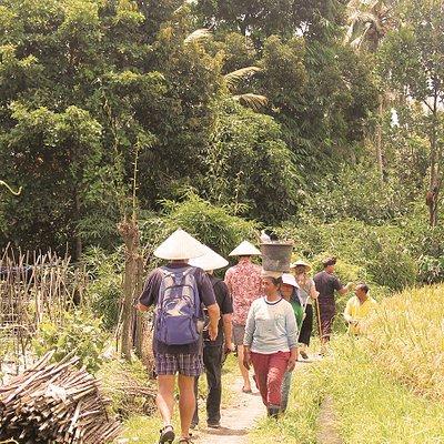 walking among the rice paddies