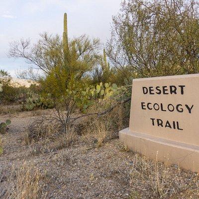 Desert Ecology Trail -