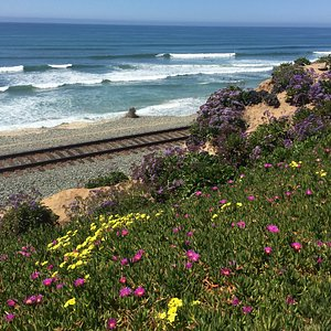 Spring time at Seagrove Park in Del Mar (San Diego)