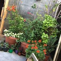 the flowery corner