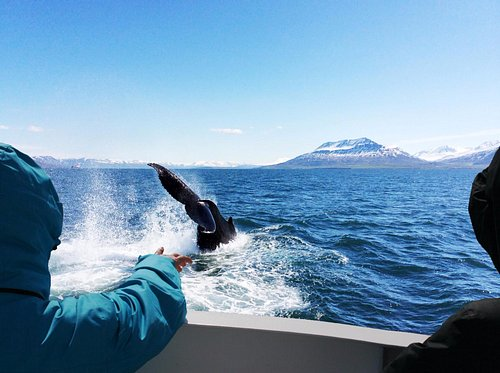 Orcas, minke, humpback or dolpins! This is so much fun!
