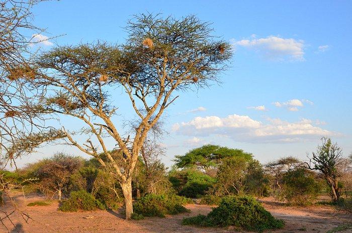 Characteristic landscape