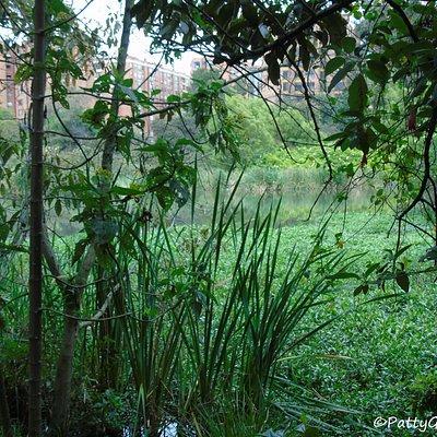 Es sentirse en una selva disfrutando del aire y la tranquilidad