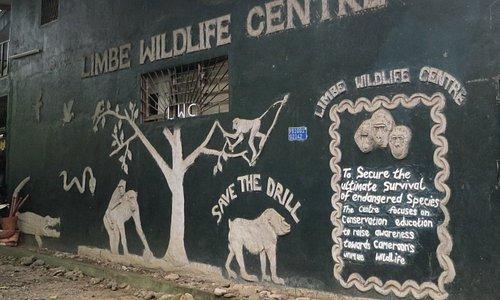 Limbe Wildlife Centre, aka Limbe Zoo