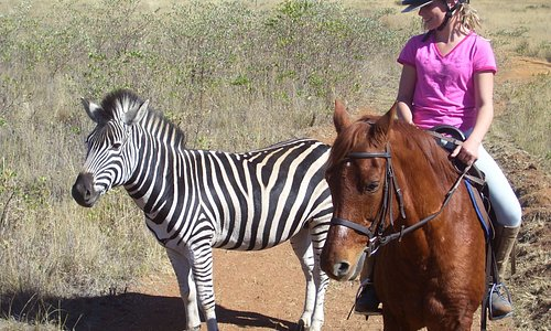 More close encounters with zebra