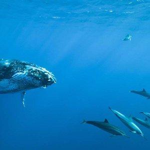baleines et dauphins nageant ensemble