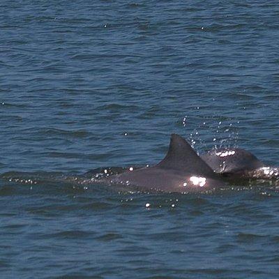 Fácil ver golfinhos na Baía dos Golfinhos