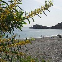 Cala Punta de la Mona-playa Ensenada de los Berengueles