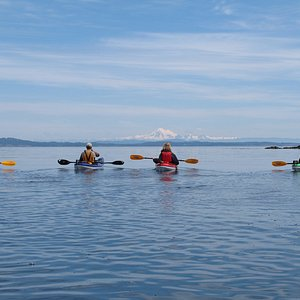 Views of the beautiful Olympic Peninsula on the Discover Island tour off of Oak Bay.