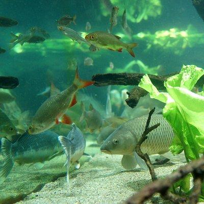 un des aquarium