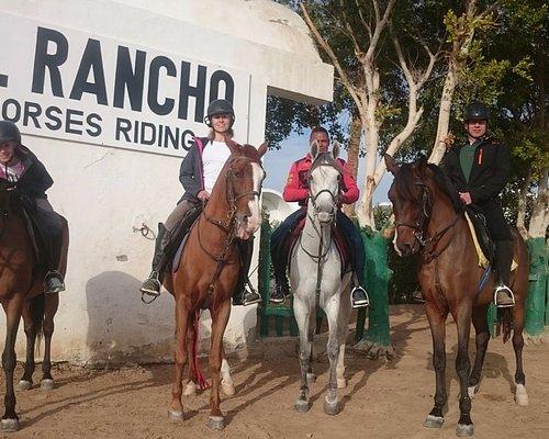 Hurghada Horses
