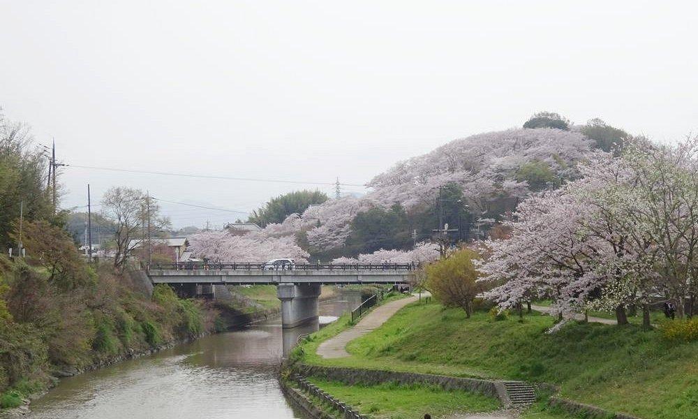 龍田川から三室山を北側からみた景色。