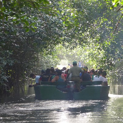crowded boats through the swamp