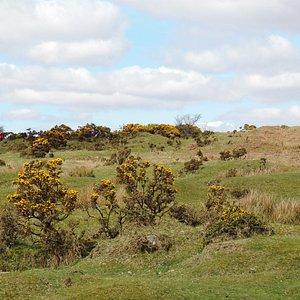 The moors near Minions