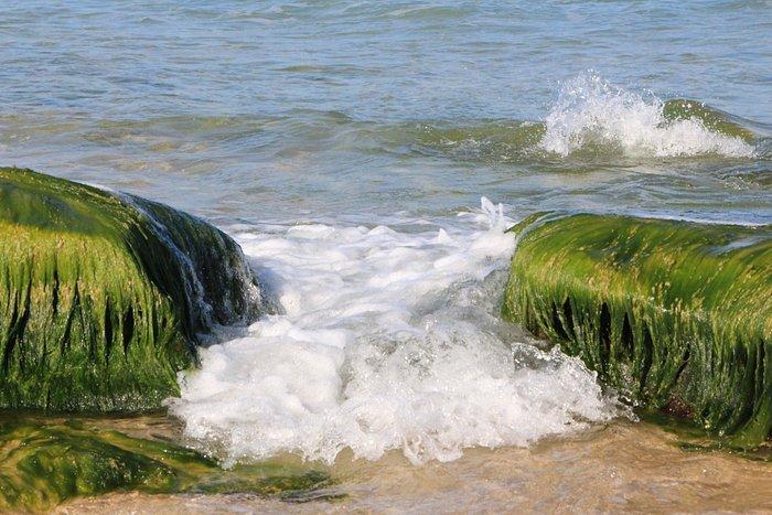 החוף ליד המצדה