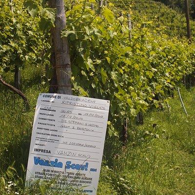 Wineyards identification