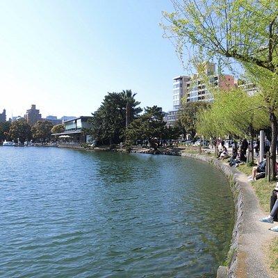 湖畔楊柳隨風飄曳