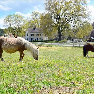 Beautiful ponies in front of the 1870 farm house!