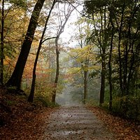 The largest of Pittsburgh's historic regional parks at 644 acres, Frick Park is also the younges