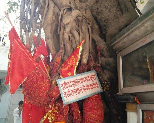 The tree where Luv and Kush tied Hanuman ji