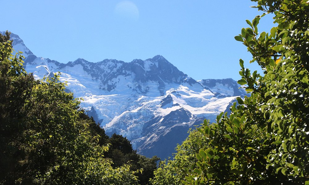 Mount Cook - Governors Bush Walk 22