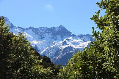 Mount Cook - Governors Bush Walk 22