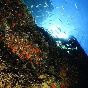 incredibbili colori, grazie al contrasto tra le rocce vulcaniche e la flora e la fauna dei nostr