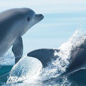 Escursione alla ricerca dei delfini