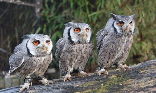 Kom ons bezoeken in 'het vreemdste dierenpark van Nederland'