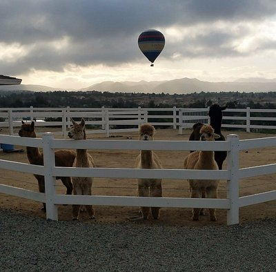 Sunrise balloons sail over our ranch.