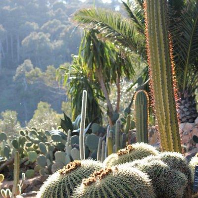 Ici on appelle les cactus par leurs petits noms.