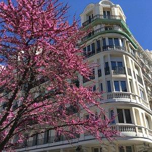 La primavera esplosa a Madrid ci fa viaggiare nel tempo