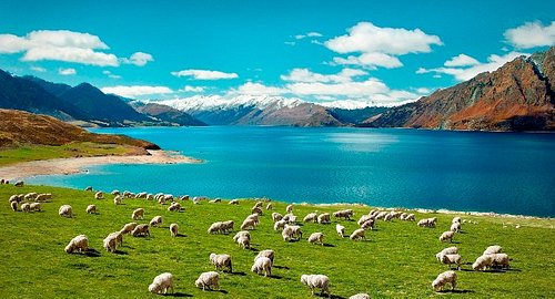 New Zealand Summer Adventures with Carrington Tours