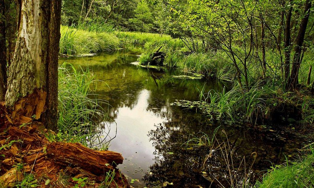 Gołąbek- Jelenia wyspa Bory Tucholskie
