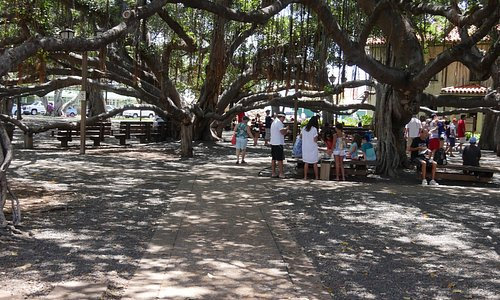 The Banyan Tree in Front Street Lahaina