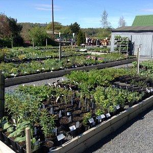 Derwen Garden Centre & Farm Shop