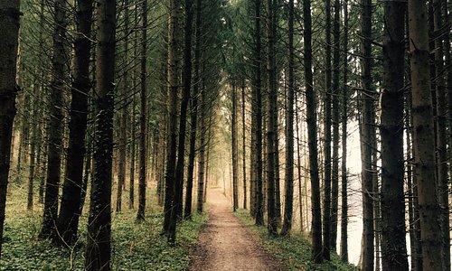 Traunuferweg