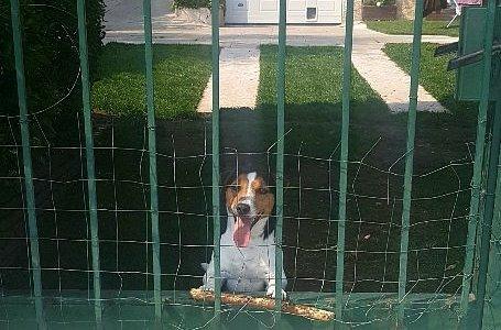 Fred, il cane Re del porto